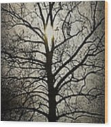 Ancient Tree Wood Print