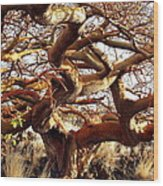 Ancient Wiliwili Tree Wood Print