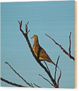 And A Dove In A Tree Wood Print