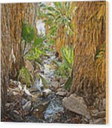 Andreas Creek In Andreas Canyon In Indian Canyons-ca Wood Print