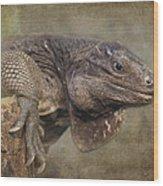 Anegada Ground Iguana - Houston Zoo Wood Print