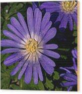 Anemone Blanda Blue Wood Print