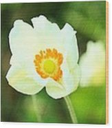 Anemone Wood Print by Cathie Tyler