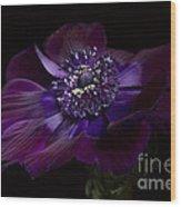 Anemone Coronaria De Caen Wood Print