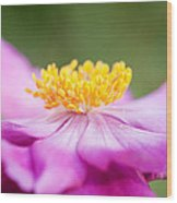 Anemone Flower Close Up Wood Print