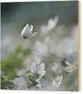 Anemone Flower Wood Print