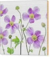 Anemone Japonica Wood Print