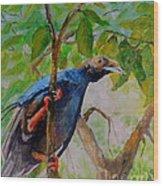 Angel Bird Of  North Moluccas Wood Print