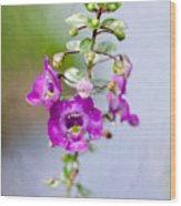Angel Face Flower - Summer Snapdragon Wood Print