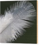 Angel Feather Wood Print