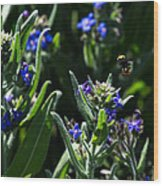 Angel Island Bee Wood Print