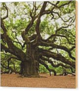 Angel Oak Tree 2009 Wood Print by Louis Dallara