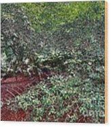 Angel Oak Tree 3 Wood Print
