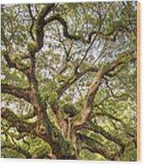 Angel Oak Tree Johns Island Sc Wood Print