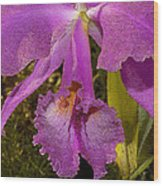 Angel Orchid Gold Leaf Wood Print