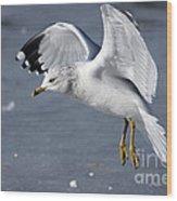 Angel Wings Wood Print
