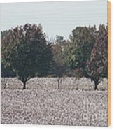 Angelic Cotton Fields Wood Print