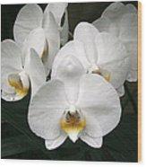 Angelic Delight Wood Print
