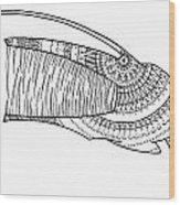 Angler Fish 06 Wood Print