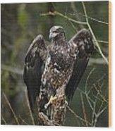 Angle's Wings Wood Print