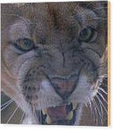 Angry Florida Panther Wood Print