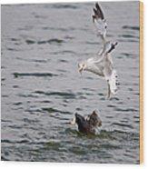 Angry Gull Wood Print