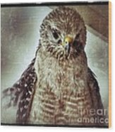 Angry Hawk Wood Print