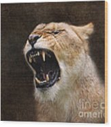 Angry Lioness Wood Print