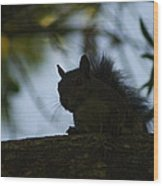 Angry Squirrel Wood Print