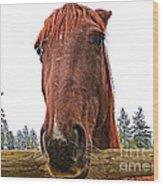 Angry Stallion Wood Print