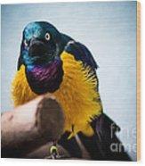 Angry Sunbird Wood Print