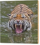 Angry Tiger Wood Print by Louise Heusinkveld