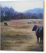 Angus Steer In Franklin Tn Wood Print by Janet King