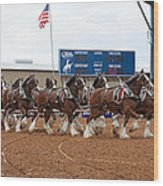Anheuser Busch Clydesdales Pulling A Beer Wagon Usa Rodeo Wood Print