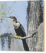Anhinga And Spanish Moss Wood Print