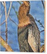 Anhinga At The Pond Wood Print