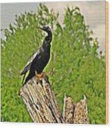 Anhinga Bird On Stump Wood Print