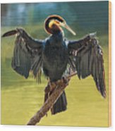 Anhinga Drying His Wings Wood Print