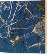 Anhinga Everglades Wood Print