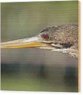 Anhinga Florida Water Bird  Wood Print