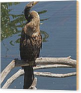 Anhinga Immature Wood Print