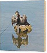 Anhinga Wood Print by Judy  Waller