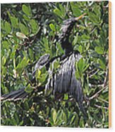 Anhinga Male Wood Print