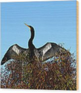 Anhinga Pride Wood Print by April Wietrecki Green