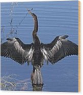 Anhinga  Sunbathing Wood Print