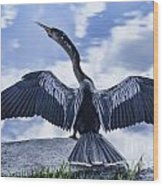 Anhinga Take Off Wood Print