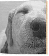 Animal Dog Days Wood Print