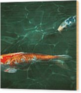 Animal - Fish - Koi - Another Fish Story Wood Print
