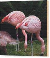 Animal - Flamingo - A Set Of Flamingoes Wood Print