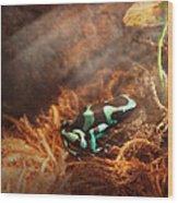 Animal - Frog - Lick The Green Frog Wood Print